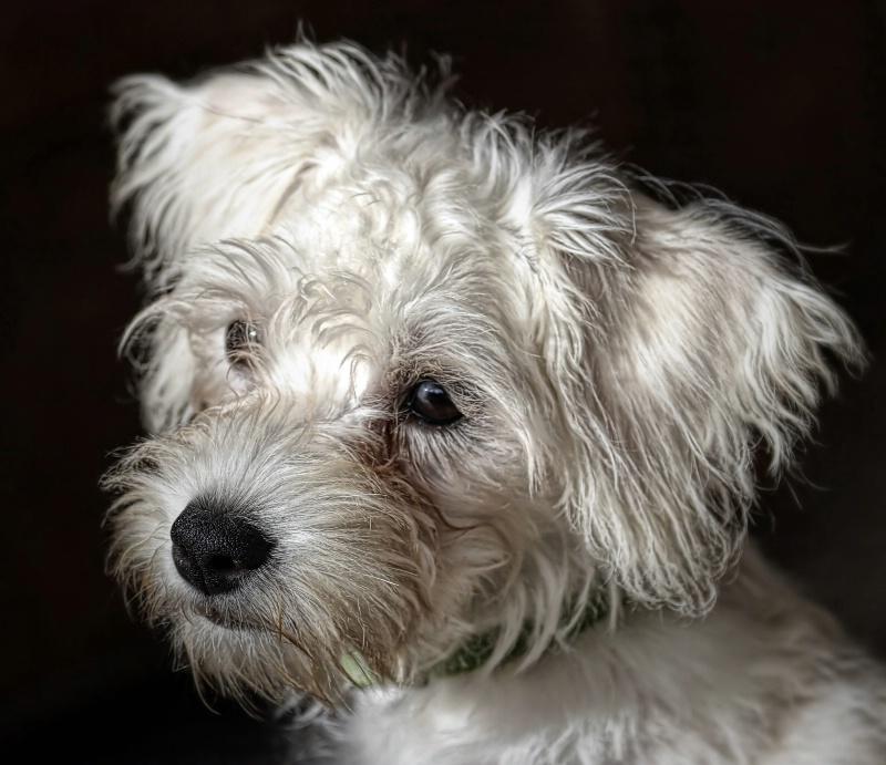 Puppy Love (3)