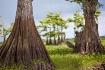 Swampland Native