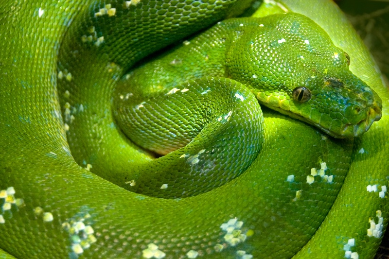 Spiral Green Serpentine
