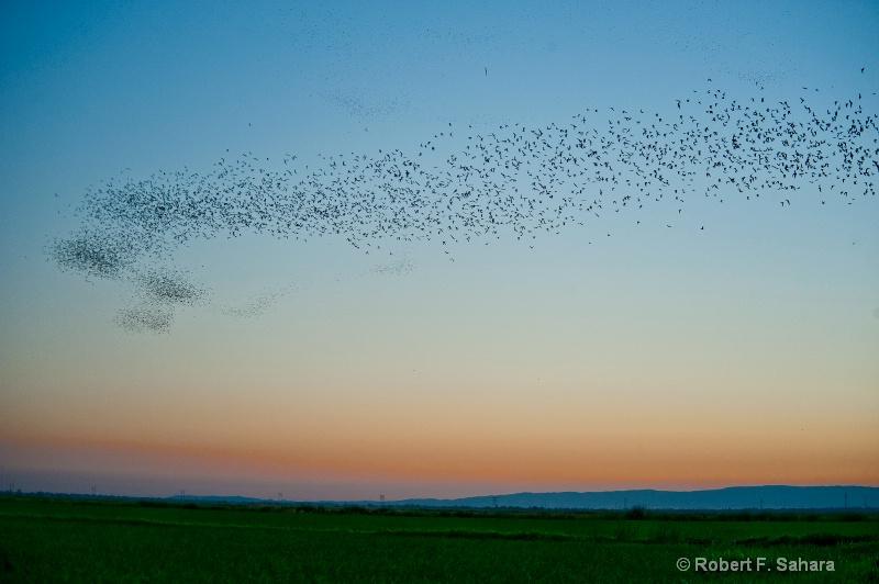 Hungry Bats - ID: 10456488 © Robert F. Sahara