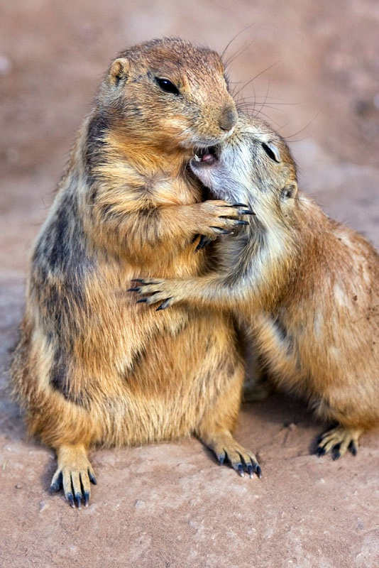 A Love Bite