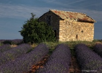 Stone House, Provence Lavender