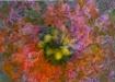 Swirling Flowers ...