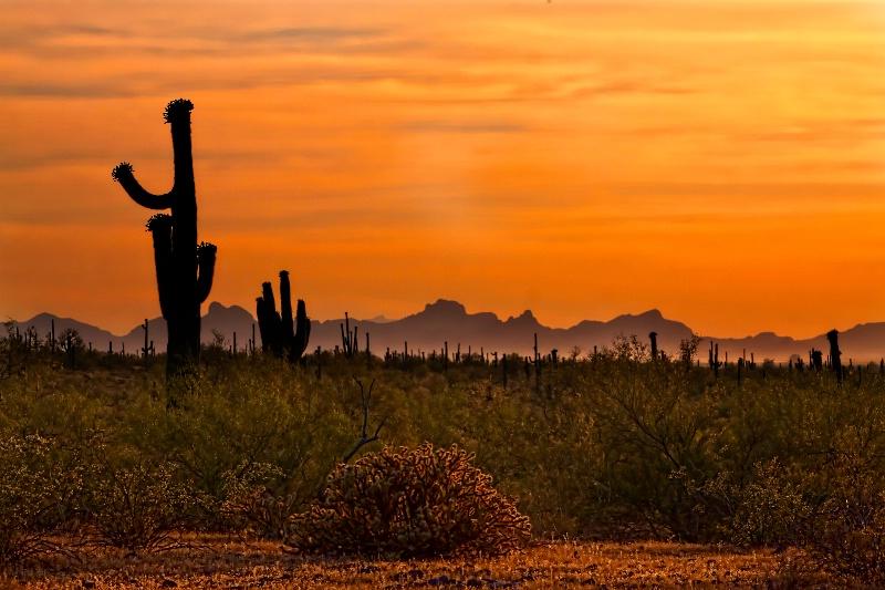 Picachoo Sunset