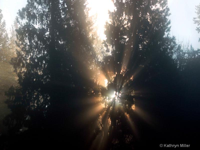 Morning Sun Burst
