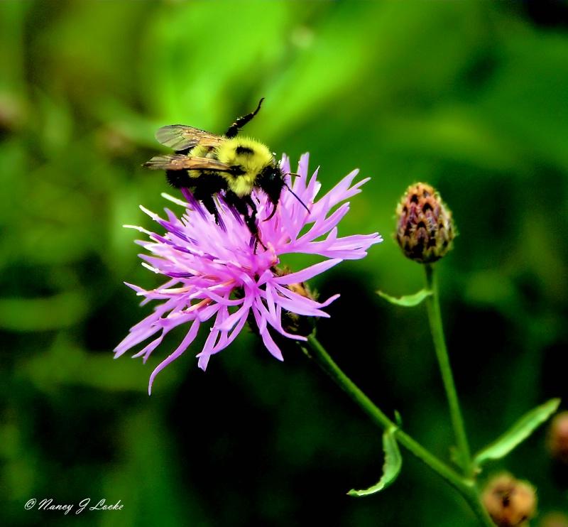 Bee Stretch