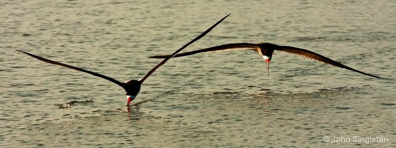 Fish Hunt - ID: 10510063 © John Singleton