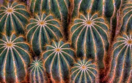 Cactus Circles