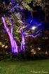 Tree Light Deligh...