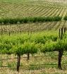 Green Acres 2