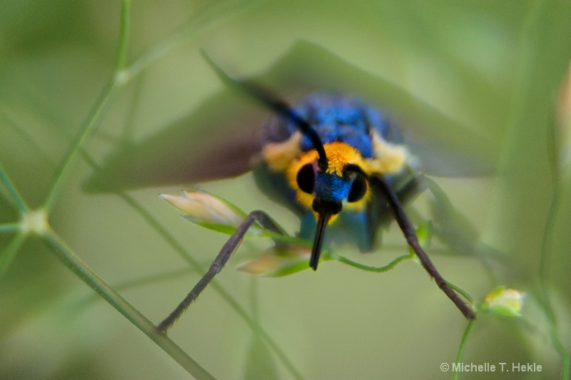 more focus on bug and more color - ID: 10549742 © Michelle T. Hekle