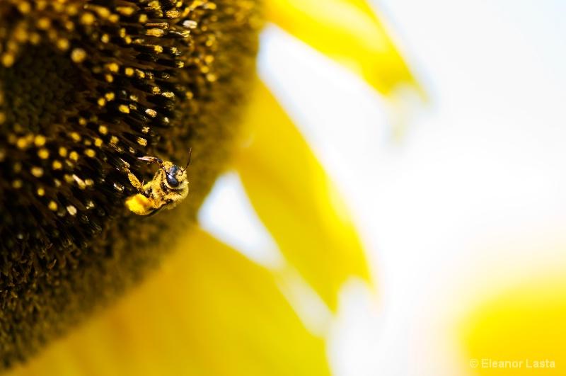 So Bee It.