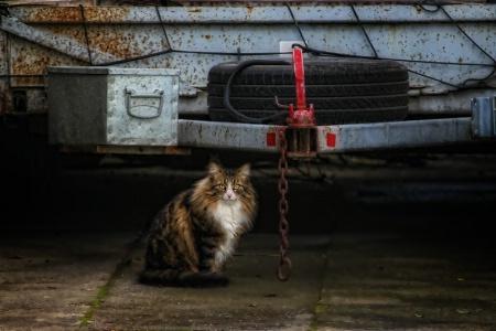 trailor cat