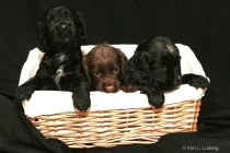 Pups In A Basket!
