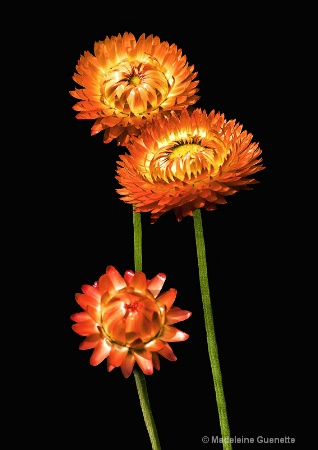 harmony-in-orange