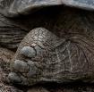 tortiose toes