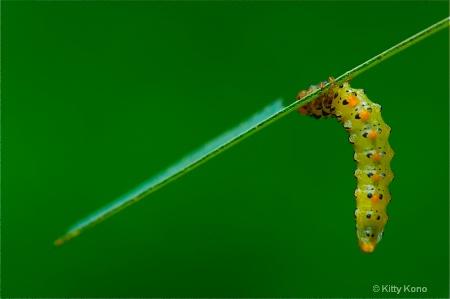 The Underside of a Caterpillar