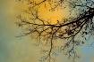 Oak tree morning ...