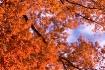 Oak tree in sunli...