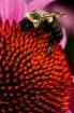 Bee, Dazzled, & S...