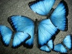 Blue Morpho Art