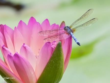 <b>The Lily Pond</b>