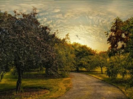 Crabapple Orchard