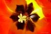 Red Tulip Center