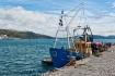 Sea Seeker ~ Lyme...