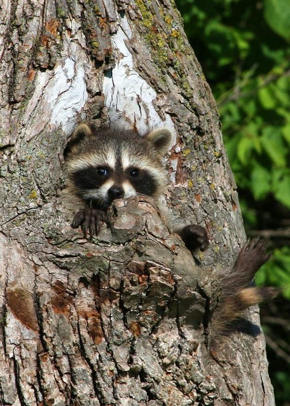 I'm Stuck! - ID: 10701684 © Katherine Sherry
