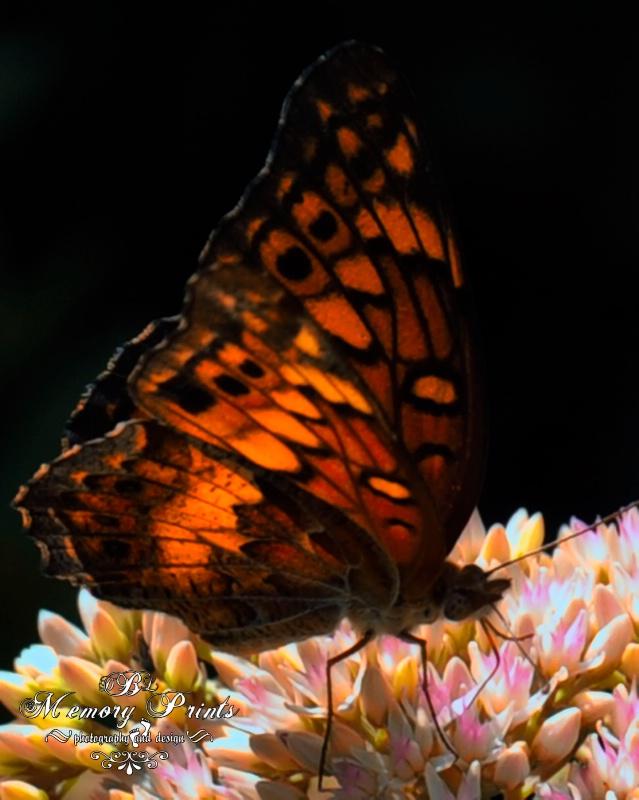 """Tiffany-Fly"" - ID: 10707032 © Deborah L. Burgess"