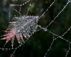 Designer Web
