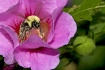 Pollen Playground