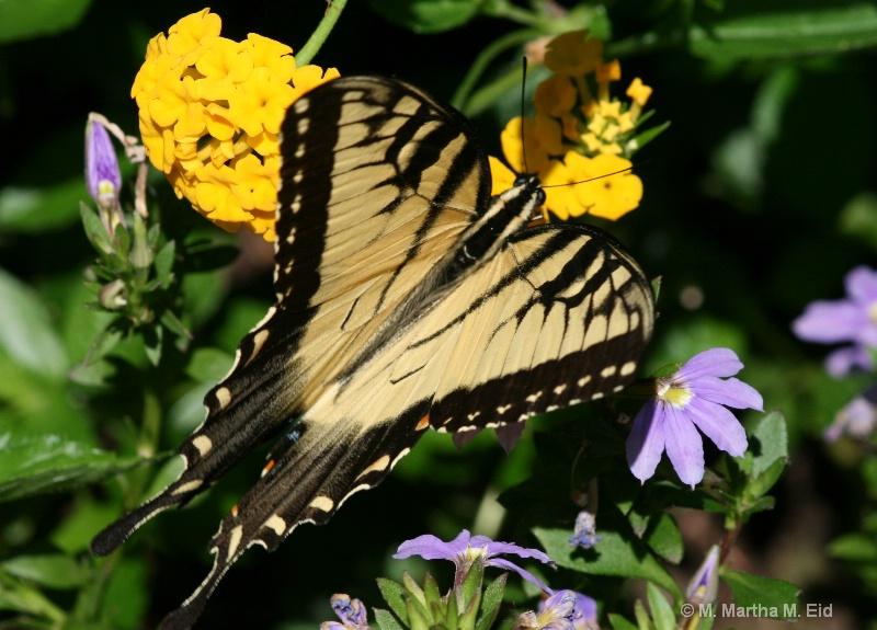 Butterfly - ID: 10718719 © M.  Martha M. Eid