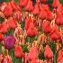 © M.  Martha M. Eid PhotoID# 10718729: Longwood Gardens, PA