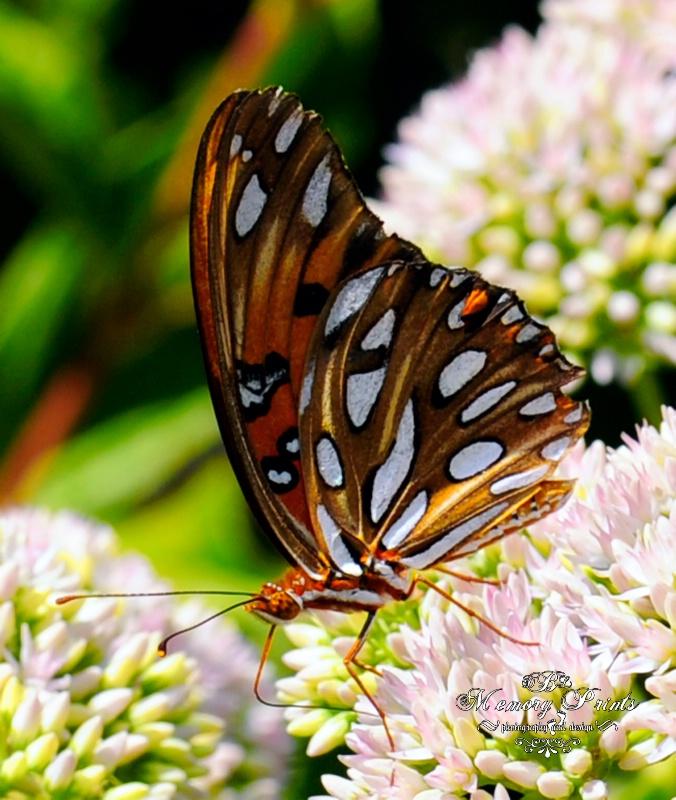 """Utter-Flutter"" - ID: 10728433 © Deborah L. Burgess"