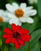 Bright Red Flower