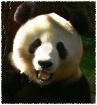 Panda EXPRESSion