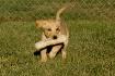 Puppy Spirit 2