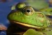 Frog's Eye Vi...