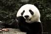 Zhen Zhen portrai...