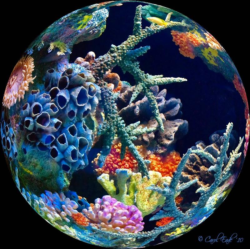 Fisheye View - ID: 10743458 © Carol Eade