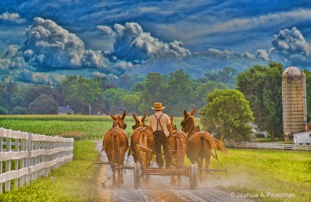 Amish Farmer - End of the Day