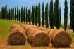 Tuscan Hay
