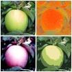 Warhol Apples