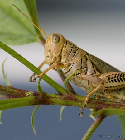 Portrait of a Pest