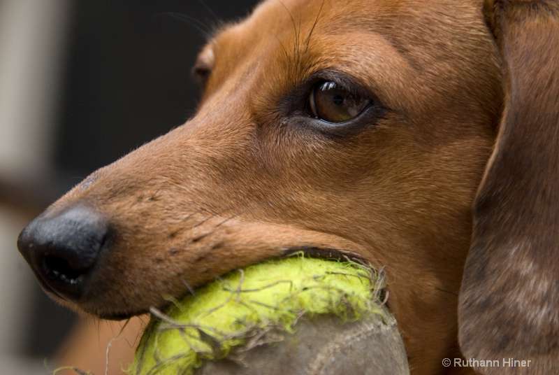 Sadie and her Ball