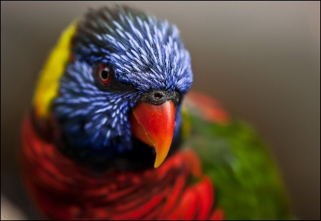 Photography Contest Grand Prize Winner - September 2010: Brilliant Plumage
