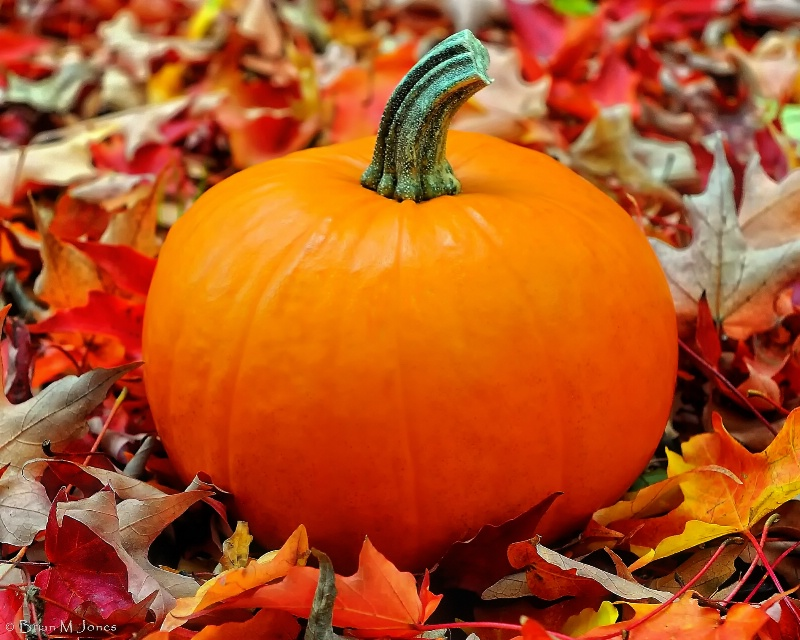 Pumpkin Colors