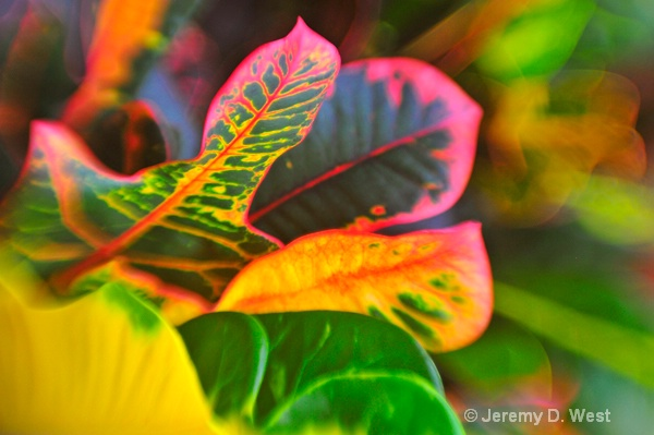 leafcolors  6x4